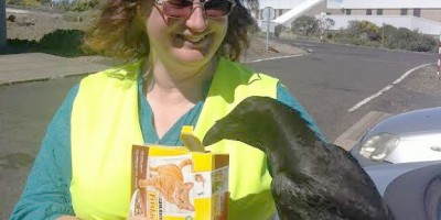 Sheila Crosby feeding cat biscuits to a cheeky raven, Roque de Los Muchachos