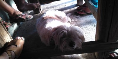 Dog under the table, surrounded by feet